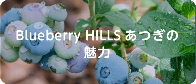 Blueberry HILLS あつぎの魅力
