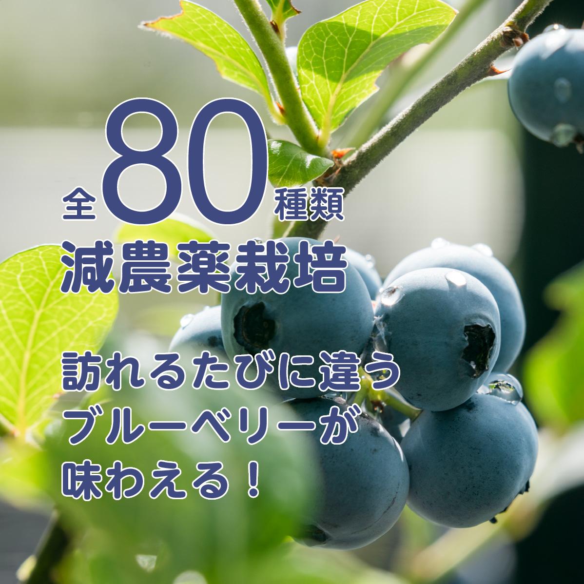80種類の減農薬栽培のブルーベリーが味わえる※常時10種類